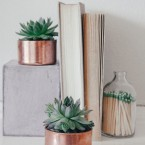 copper succulents